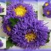 Астра з фоамірана: 2 варіанти виготовлення цієї квітки