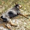 До чого сниться мертва собака: вас можуть очікувати труднощі в житті
