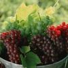 До чого сниться виноград жінці: найточніше тлумачення бачення сонниками міллера і феломена