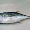Калорійність тунця, його корисні і дієтичні властивості
