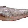 Користь і шкода риби хоки, її калорійність і вітамінний склад