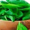 Вчені: листя шпинату допомагають з боротьбі із зайвою вагою - фото