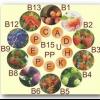 Вітаміни для росту людини, зміцнюють скелет і збагачують організм всіма необхідними елементами